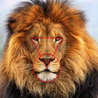 Lionwithfaceshapes